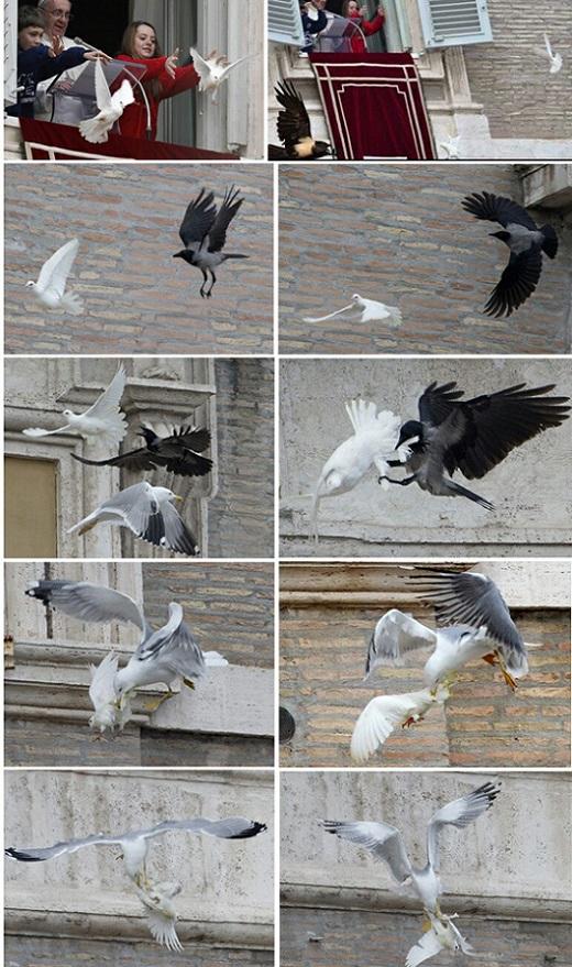 bergoglio-doves-attacked-1.jpg